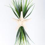 Festive Wreath System bumpy starfish