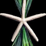Flat Starfish with Grass
